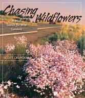 ChasingWildflowers