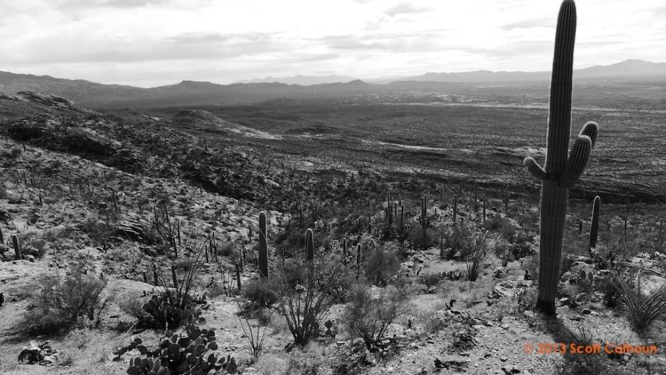 SaguaroParkDos13