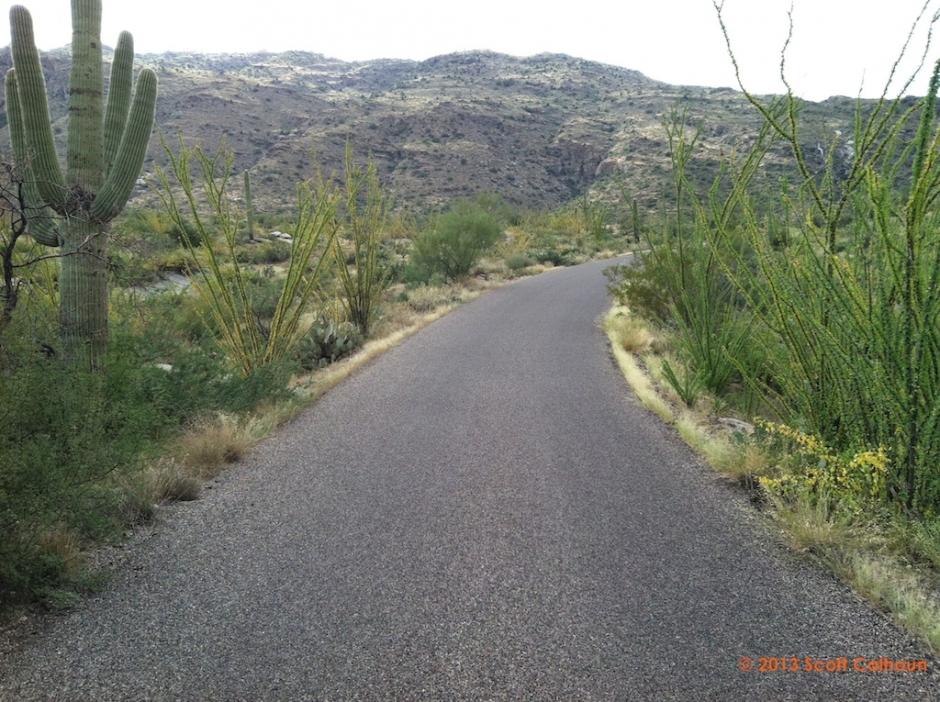 SaguaroParkDos14