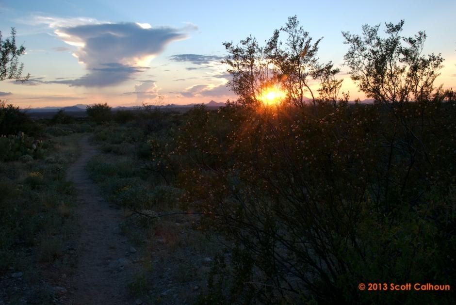 SaguaroParkDos8