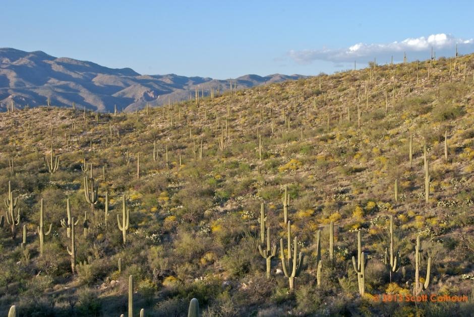 SaguaroParkDos9