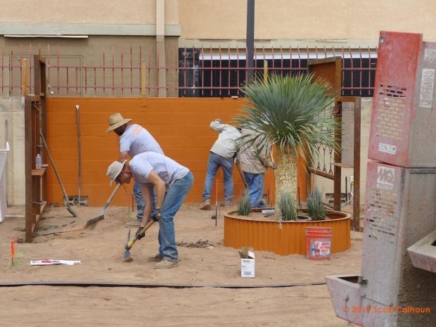 Tucson Botanical Gardens Growdown! Process Photos