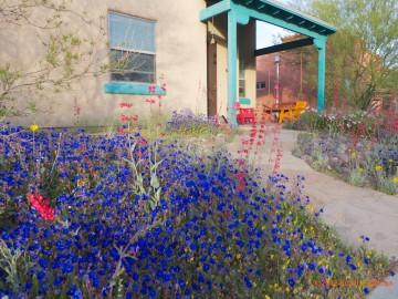 Garden Design Portfolio, Zona Gardens